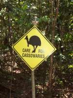 ... Cassowaries ...