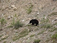 Black Bear at the side of the road!